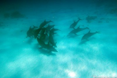 Swim with dolphins in Sansibar