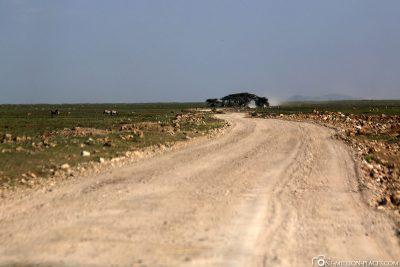 Der Weg durch den Serengeti Nationalpark