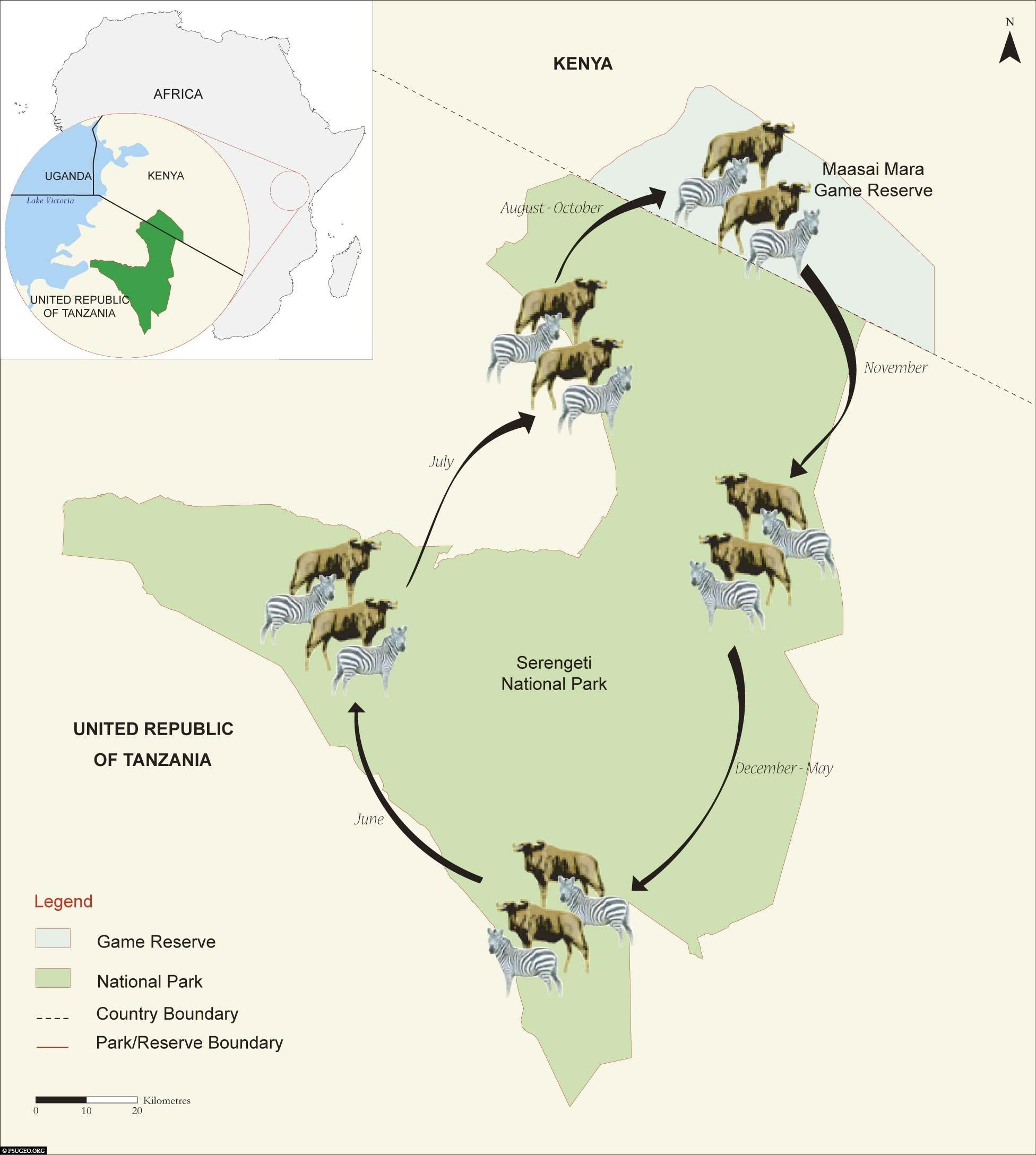 Karte, Tiermigration, Serengeti Nationalpark, Safari, Tansania, Afrika, Tour, Reisebericht