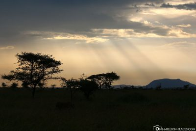 Evening atmosphere in the Serengeti