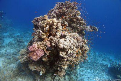 Ein Korallenblock