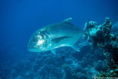 Die Unterwasserwelt der Coraya Bay
