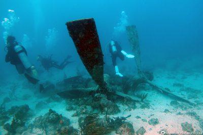 Flugzeugwrack-Tauchen in Aruba