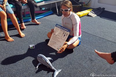 The briefing for swimming with whale sharks