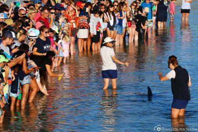 Die Menschenmassen am Strand