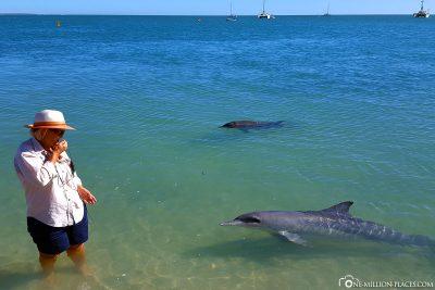 Die Delfine ganz nah am Strand