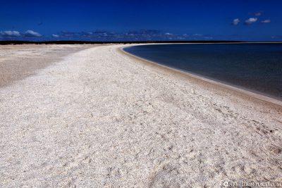 Der Shell Beach in der Shark Bay