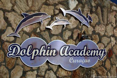 Die Dolphin Academy Curaçao