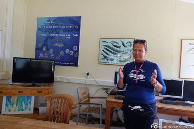 Unser Briefing zum Tauchen mit Delfinen