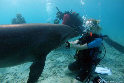 Tauchen mit Delfinen