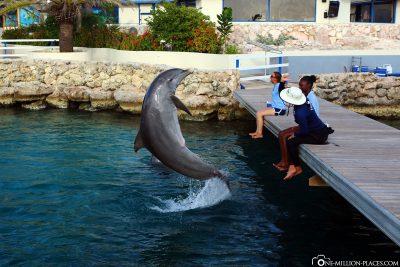 Die Delfinshow