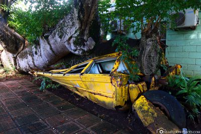 The school bus crushed by a tree