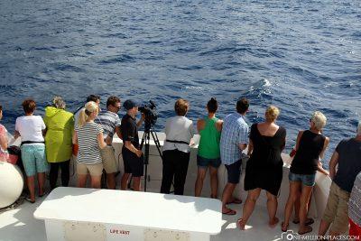 Ausschau nach Walen