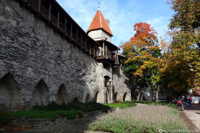 Parts of the old city wall