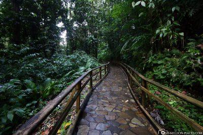 Der kurze Weg zum Wasserfall