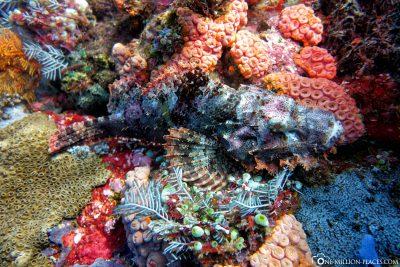 The diving spot Batu Bolong