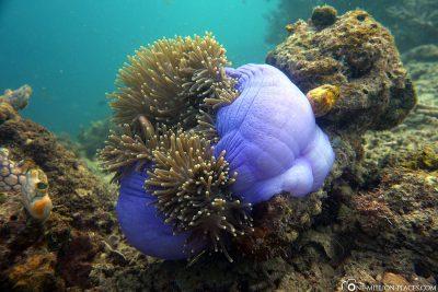 Die schönen Korallen am Hausriff