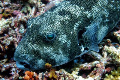 Der Tauchspot Horseshoe Reef
