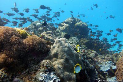 The dive spot Siaba Besar