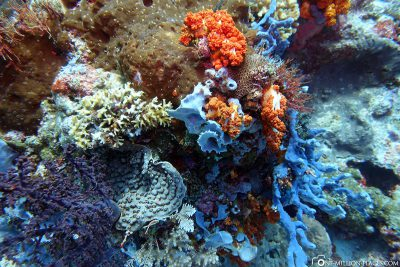The dive spot Tatawa Besar