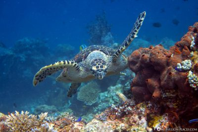 The Calderon Dive Site