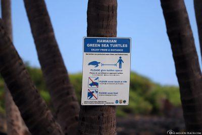 Turtle observation sign