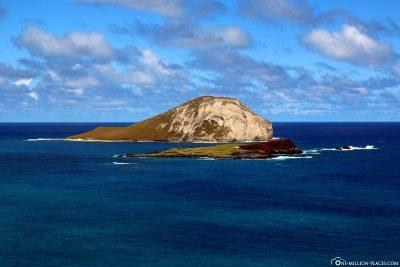 Die Insel Rabbit Island