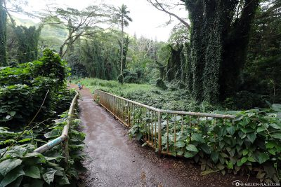 The Manoa Falls Trail