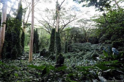 The beautiful dense jungle