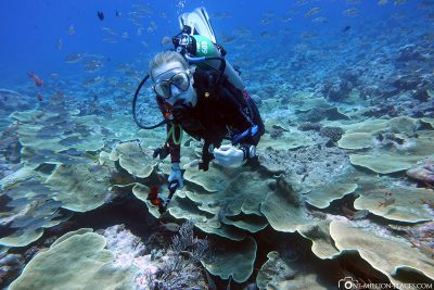 The underwater world in Palau