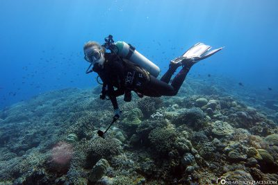 Diving on the German Channel