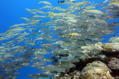 Fish swarm on the German Channel