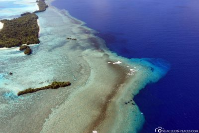 The Reef at the Blue Corner