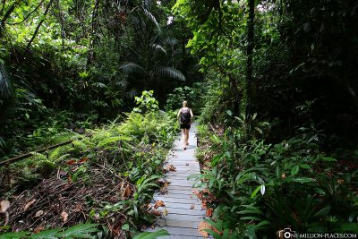 The way through the rainforest