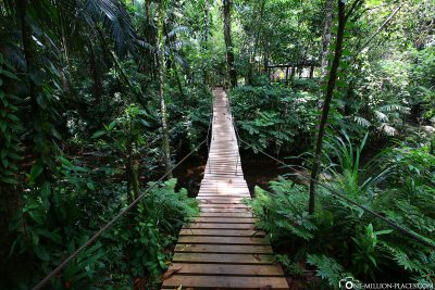 A suspension bridge just before the waterfall