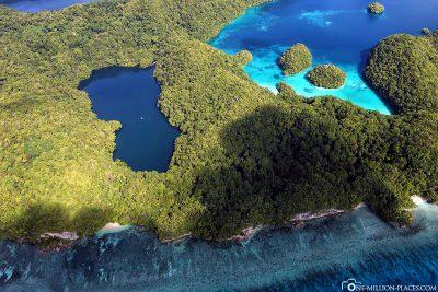 Der Jellyfish Lake in Palau