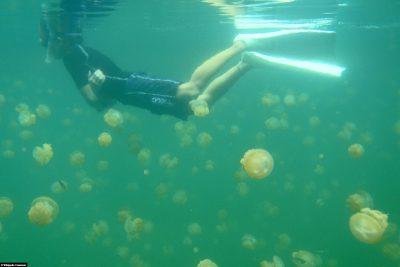 Schnorcheln im Quallensee