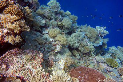 The underwater world of Palau