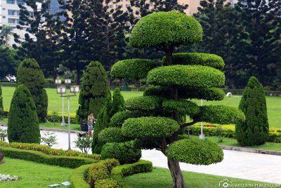 Lustig aussehende Bäume