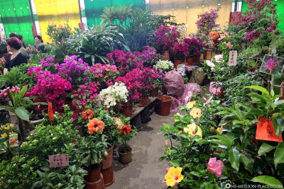 The Jianguo Holiday Flower Market