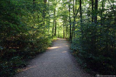 Der Fußweg zur Burg Eltz