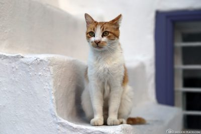 A cat on one of the white stairs