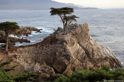 The Lonely Cypress at 17-Mile Drive