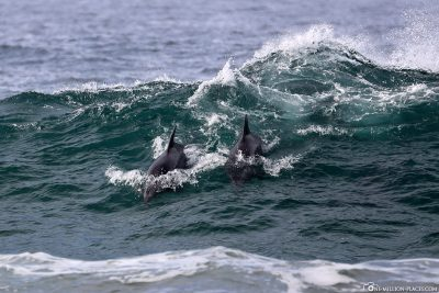 Dolphins at Pfeiffer Beach