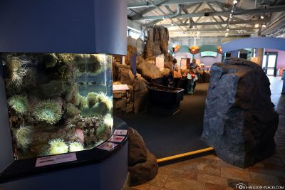 Das Aquarium in Monterey