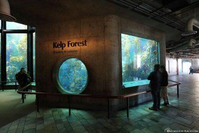 Der Kelp Forest