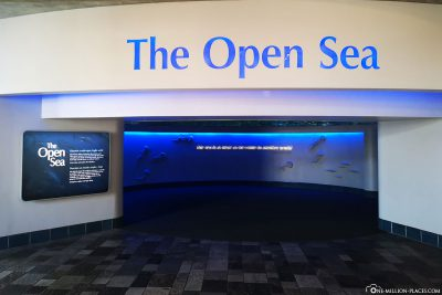 The Open Sea