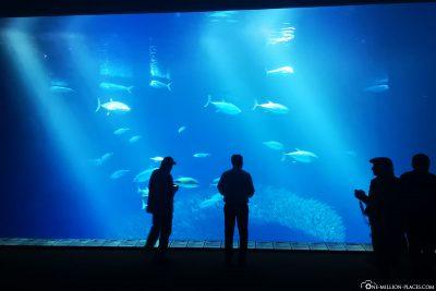Das große Becken im Aquarium