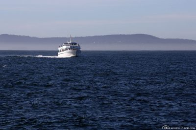 Eine andere Whale Watching Tour