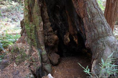 Ein ausgehöhlter Baum